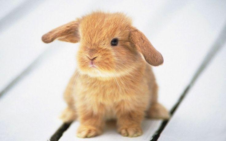 Bunnnny :)Rabbit, Cute Animal, Animal Pictures, Animal Baby, Pets, Easter Bunnies, Baby Bunnies, Ears, Baby Animals