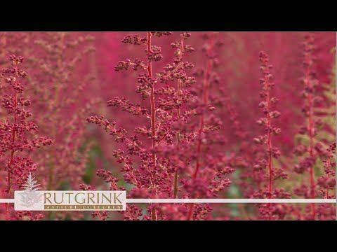 Rutgrink bedrijfspresentatie - Teelt & Producten 05 aug 2015