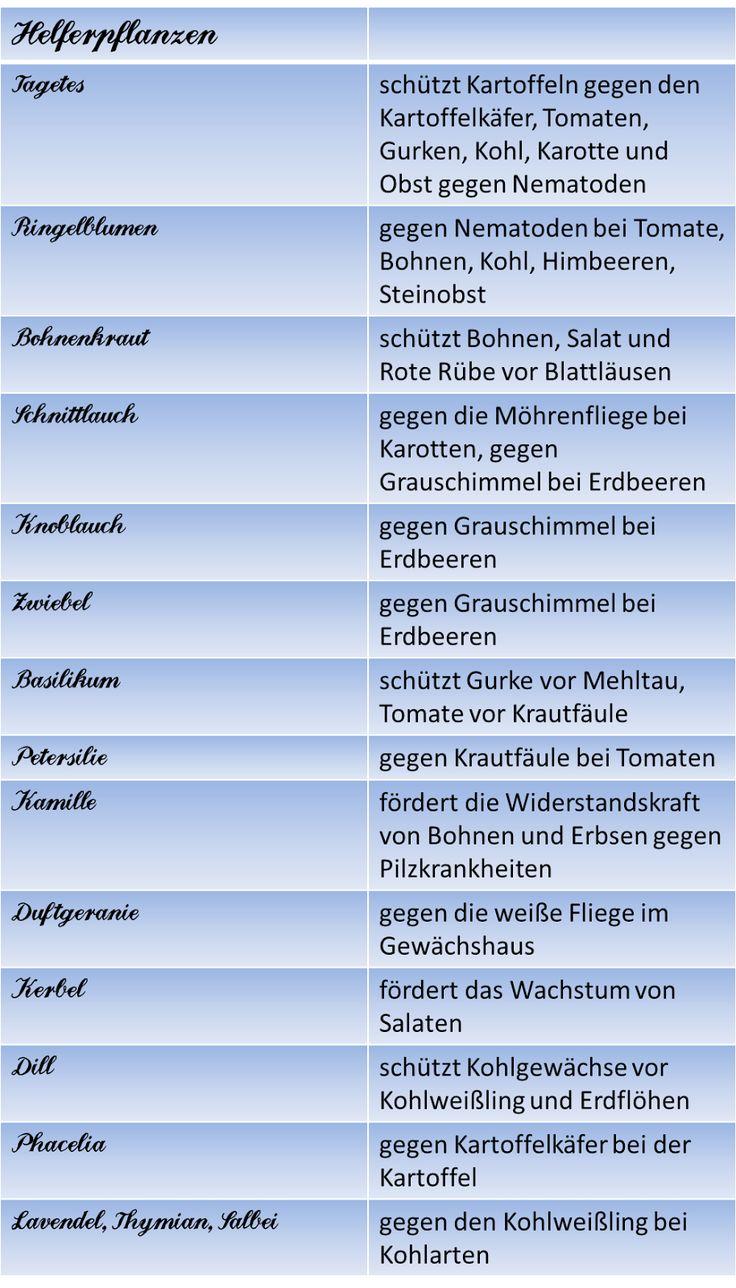 Berliner Landpomeranze: Alles rund ums Hochbeet III: Mischkultur und Fruchtfolge