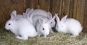 How To Start A Successful Rabbit Farm I already have them but it does not hurt to learn more.