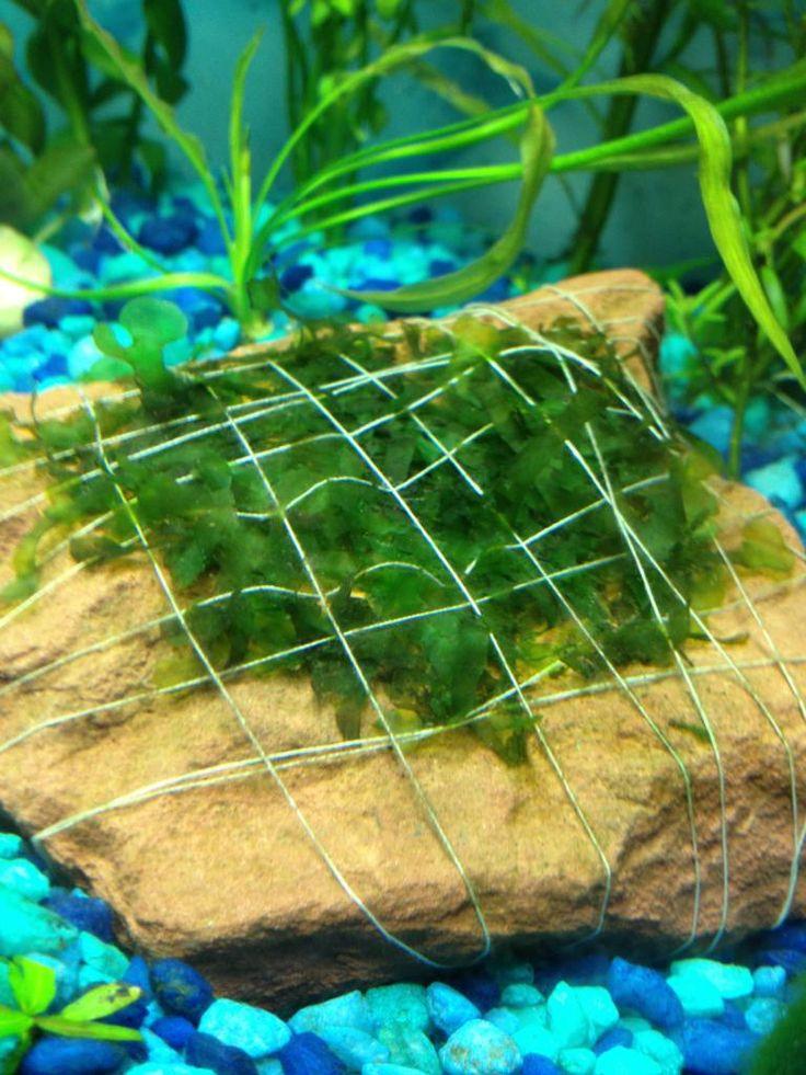 Die besten 25 diy aquarium ideen auf pinterest erstaunliche aquarien aquarium couchtisch und - Aquarium ideen ...