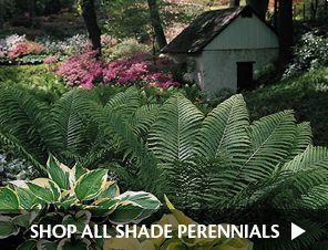 K. van Bourgondien & Sons - Wholesale Flower Bulbs and Perennials