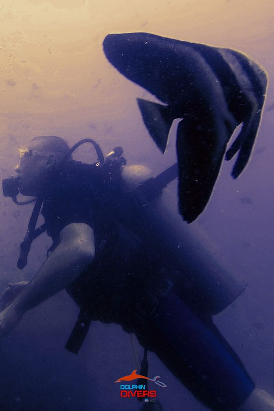 Hope to see you again !! #Dolphin Divers #Koh Chang,Thailand