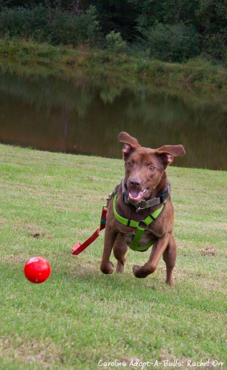 Adopt blaze on petfinder in 2020 beautiful puppy