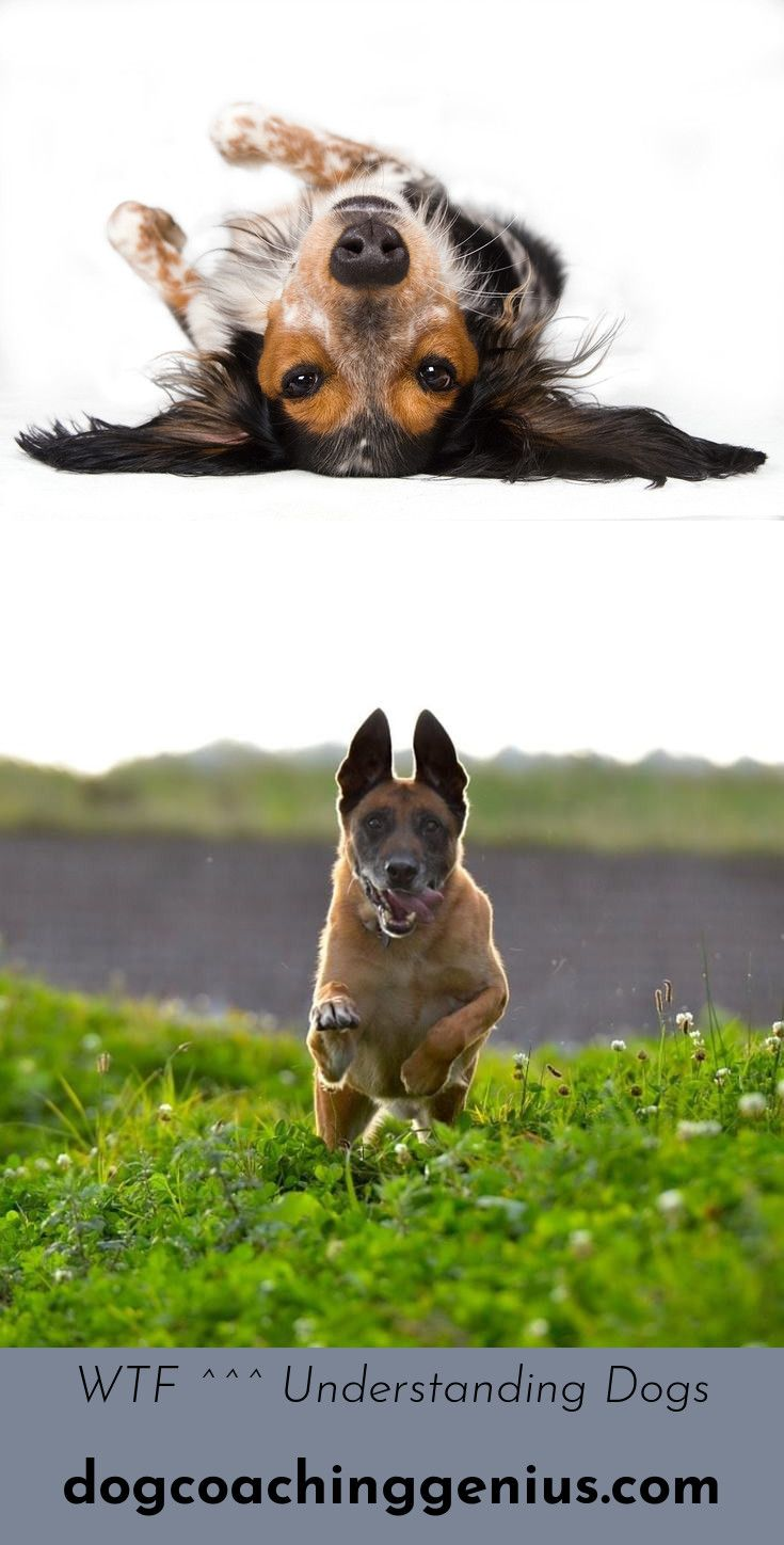 Learn About Stop Dog Jumping Doggy Dogs Animals