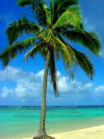 palm tree. *ifyoulikemystufffollowme :)*