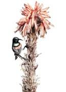 Lesser-collared Sunbird