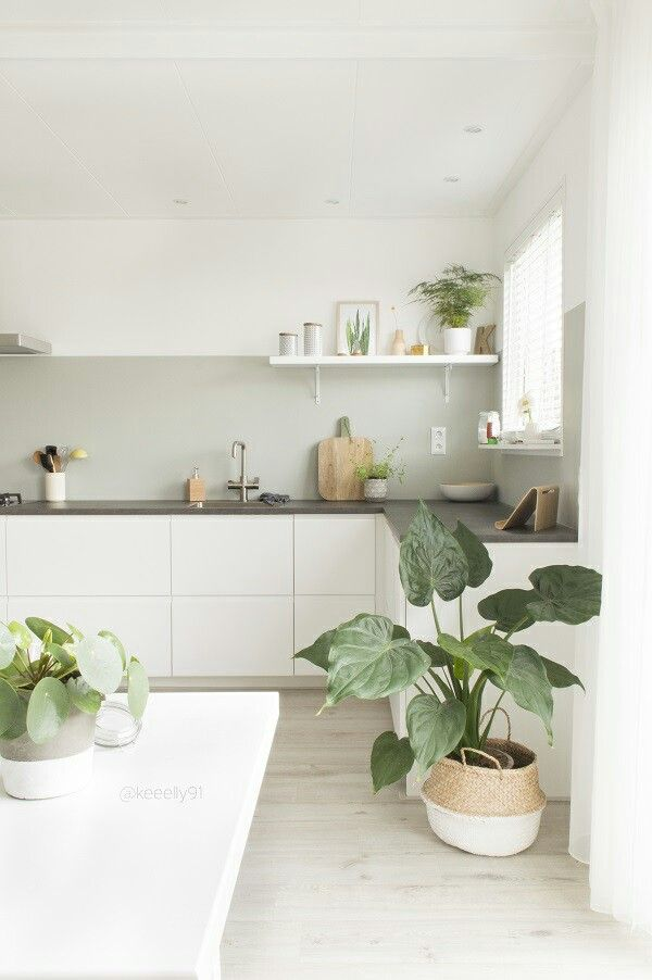 minimal kitchen with plants