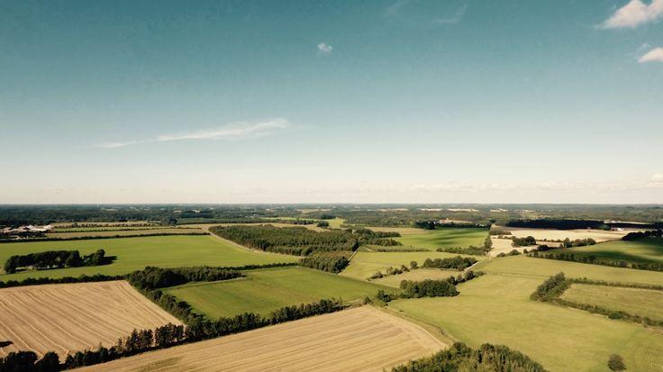 Summer afternoon in Denmark