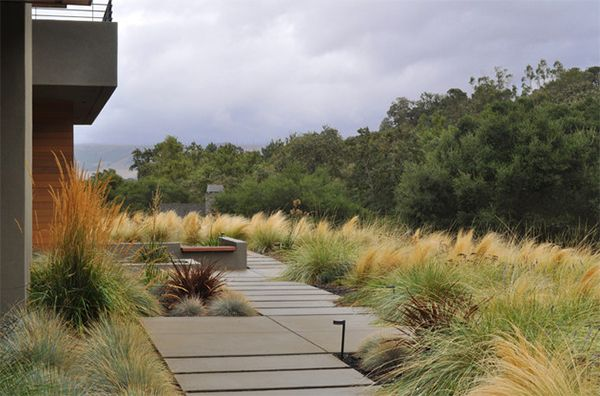 Modern landscape with Mexican Feather Grass, Calamagrostis and Festuca Marieii.