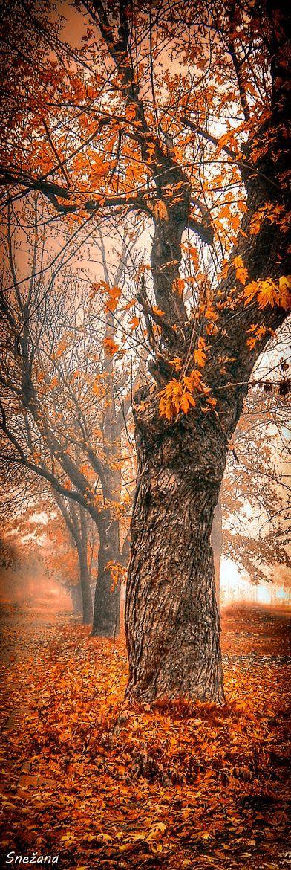 Winter is dead; spring is crazy; summer is cheerful and autumn is wise! ~Mehmet Murat ildan