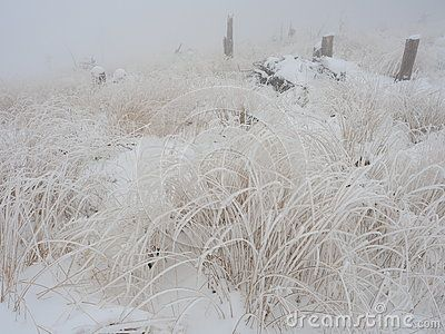 Frozen grass in mountains in Poland in winter