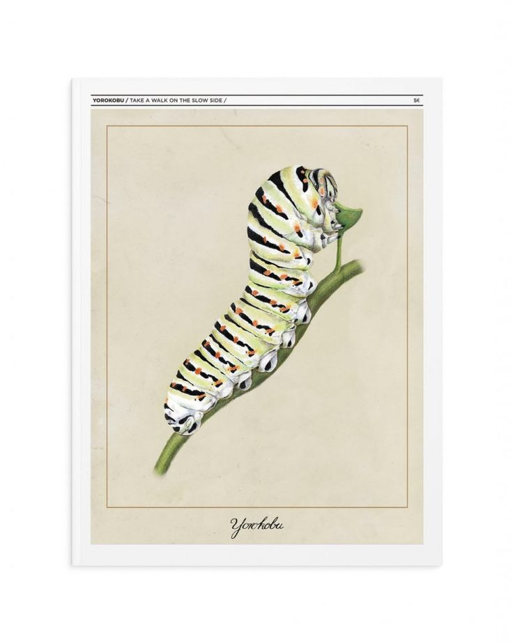 Ilustración científica color @elenaerreart @Yorokobu #IlustracionCientifica #ColoredPencils  #CientificIllustration  #caterpillar