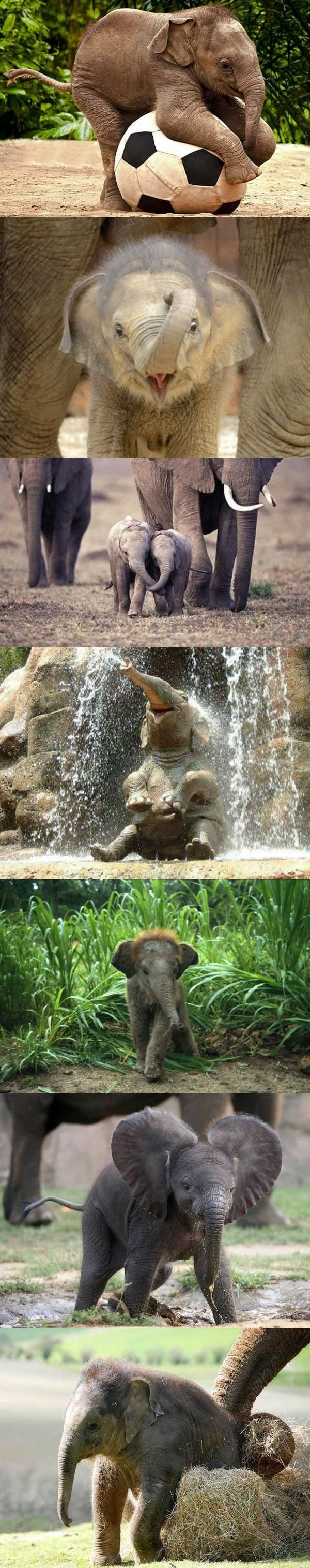 I have always thought baby elephants were cute this is just over the top!
