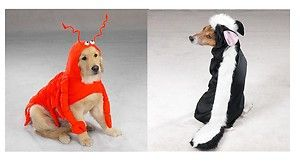 top 10 small dog costumes | ... and Skunk Costumes for Dogs Animal Themed Halloween Dog Costume | eBay
