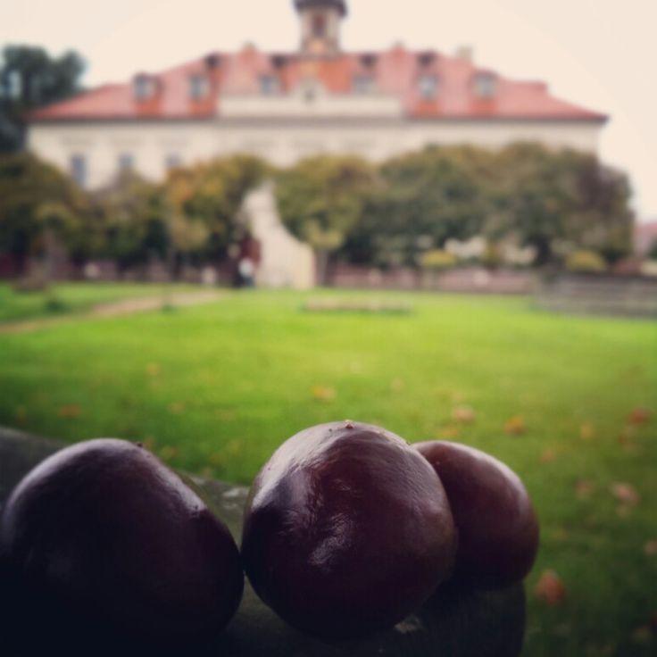 3 kaštany pro štěstí #podzim #kastany #radost #bylinkovepanstvi #zamek #stesti