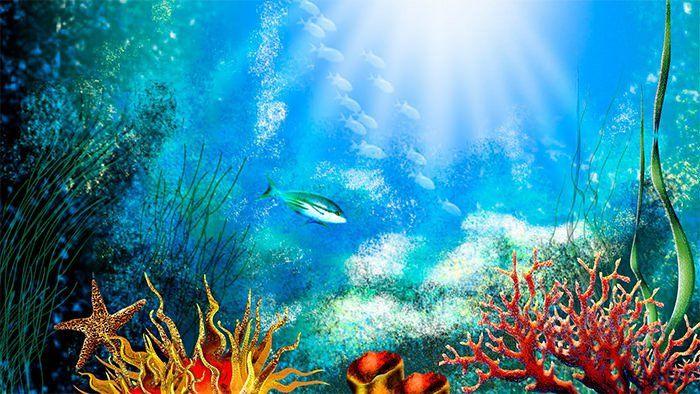 30 Fish Tank Background Printable in 2020 | Underwater ...