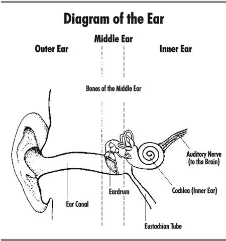 8 best vestibular disorder education images on pinterest health learn it its awesome ccuart Gallery