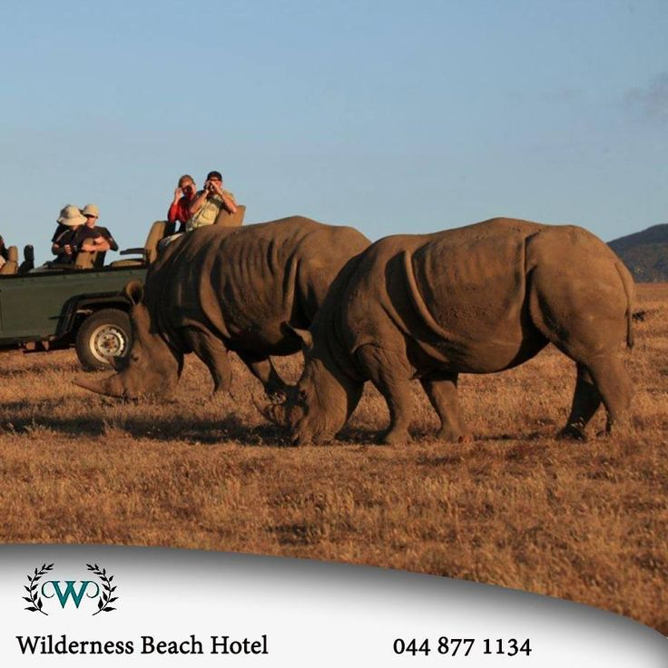 Wilderness Beach Hotel is in the heart of the Garden Route and is within driving distance of all the major attractions. How would you like the chance to get this close to Rhino's? #destinations #accommodation #ecotourism