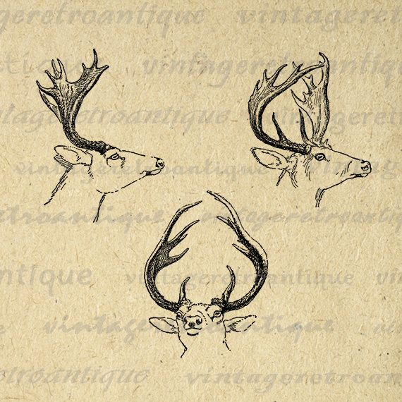 Antique Deer Digital Image Download Antlers Graphic Collage Sheet Printable Vintage Clip Art Jpg Png Eps 18x18 HQ 300dpi No.1147 @ vintageretroantique.etsy.com