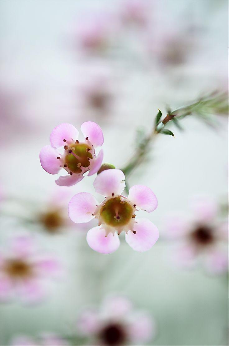 by Bellatchitchi · JardinesFormicidaeFlores SilvestresBella 6eeb45ddebe8