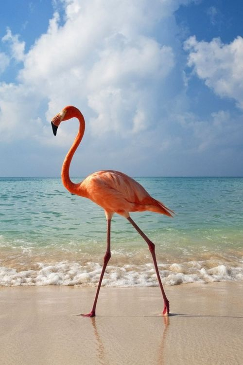 Flamingo pink...can you imagine running upon this guy while out for a stroll??