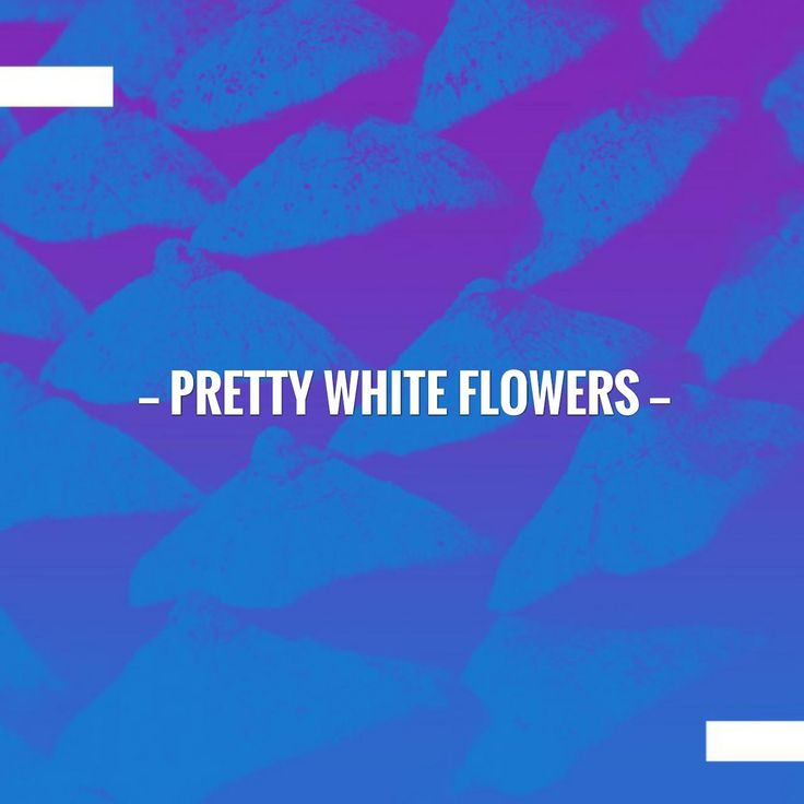 Just in: Pretty White Flowers http://thebeautyaroundus.blog/2017/09/02/pretty-white-flowers/