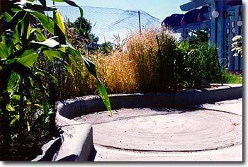 Rainbow Area: Cereal Bowl Garden 4h