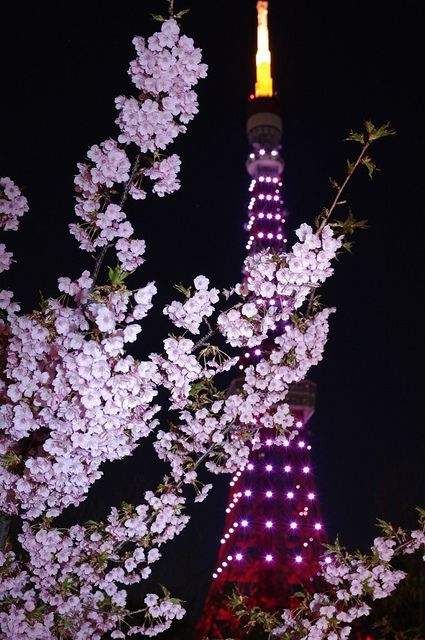 The Tokyo Tower in pink with cherry blossoms.