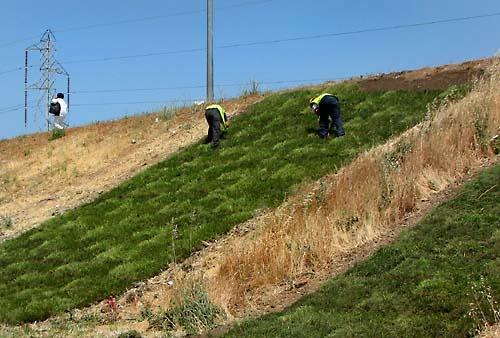 front grass: Yard, Landscaping, Garden, Front Grass