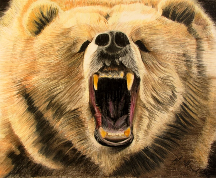 the gallery for gt grizzly bear drawing roar