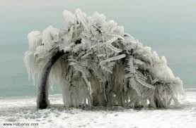 inanılmaz doğa ile ilgili görsel sonucu