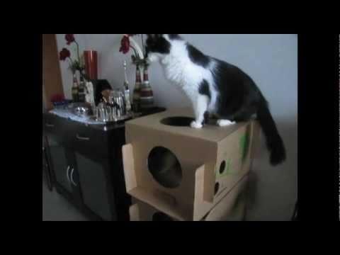 Olha só a felicidade do gatinho ganhando o seu próprio condomínio!!!! :-)