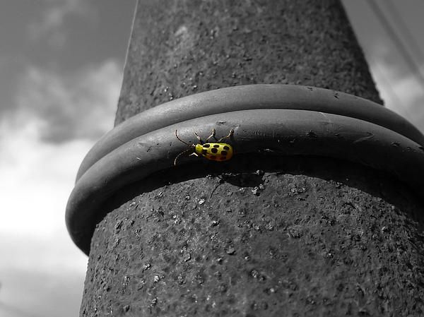 Picture of a small insect on a rusty pole located at a winery in near Sonoma, California. Want this picture printed on canvas or cards etc? Click on the image :)
