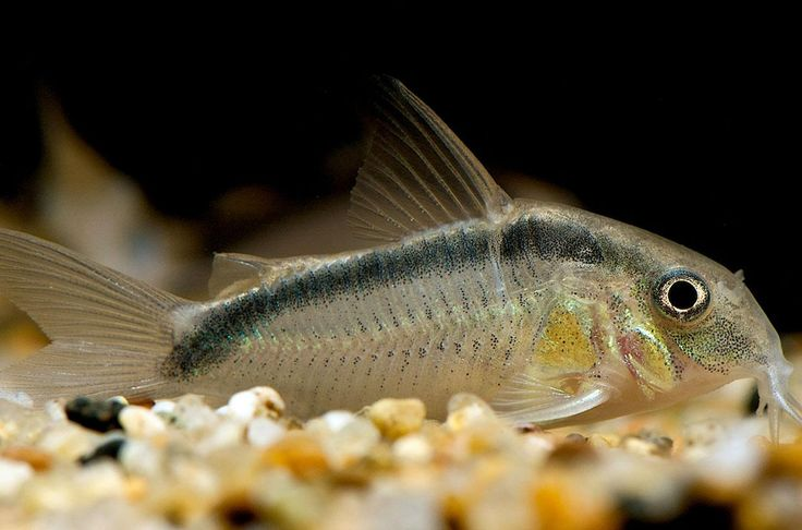 Pity, that bottom feeder freshwater agree, the