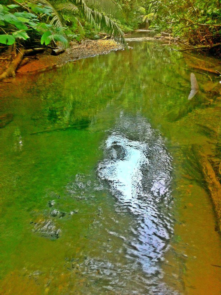 Río El Venado, Buenaventura - Colombia