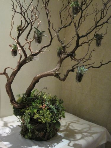 Google Image Result for http://francoiseweeks.com/wp-content/uploads/2010/12/manzanita-tree-and-succulents-Fran%25C3%25A7oise-Weeks.jpg