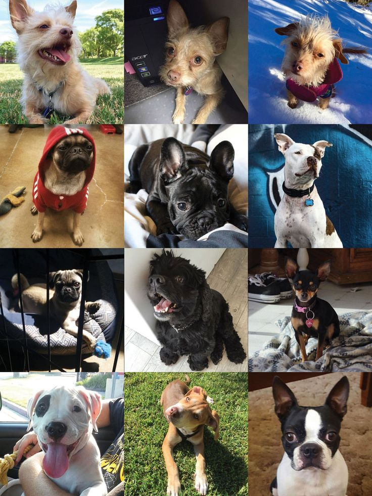 Happy National Dog Day!  @SuavecitoPomade HQ we're a dog friendly environment! Take a look at the variety of shop dogs we have everyday with us. @Suavecitodogs #Nationaldogday #Dogs #Pups #Furryfriends #Bestfriends #Flapjack #Omelette #Cinnamon #Henry #Taz #Rocky #Jax #Tobias #Cita #Miklo #Toby #Harley #Bostonterrier #Pitbull #Chihuahua #Frenchbulldog #Pugs #Cockerspaniel #Terrier #Suavecito #Suavecita