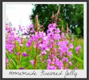 How to make homemade fireweed jelly from the blossoms of the Fireweed plant - from Cosmopolitan Cornbread