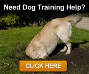 dog-training-banner