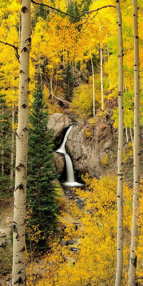 Aspens, Fall Colors - Nellie Creek Falls, Colorado -- David Kingham Photography