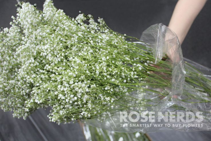 Not sure if this is agood deal,  but just in case....RoseNerds.com Wholesale Baby's Breath, Bulk Baby's Breath, Wedding Baby's Breath, Fresh Cut Flowers Baby's Breath