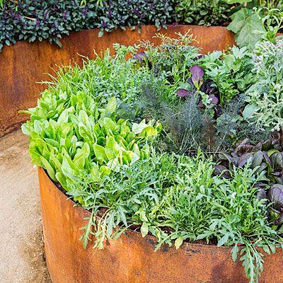 Design: Leslie Bennett, Stephanie Bittner, and Christian Cobbs, Star Apple Edible Gardens. Copper-colored steel raised beds for a modern potager (ornamental vegetable/kitchen garden)
