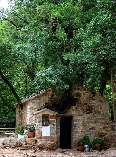 "'Agia Theodora, Vasta, ...has 17 enormous holly and maple trees growing on its roof. Most of them are taller than 30 meters. Agia Theodora, who died in this site saying ""let my body become a church, my blood become water, my hair become the forest"". Agia Theodora, one of the most important saints of the Greek Orthodox Church was buried here and it's now a very important site for pilgrims...' (Excerpt by the photographer Abocc on TrekEarth)"