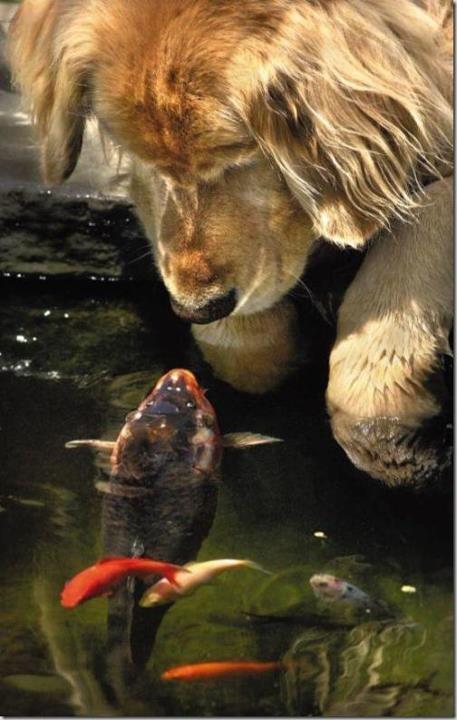 Peixinho, vem dar um beijinho...