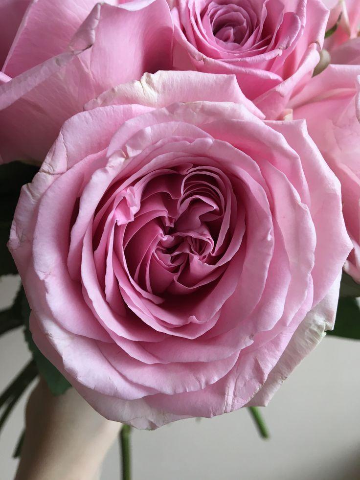 Роза Heira
