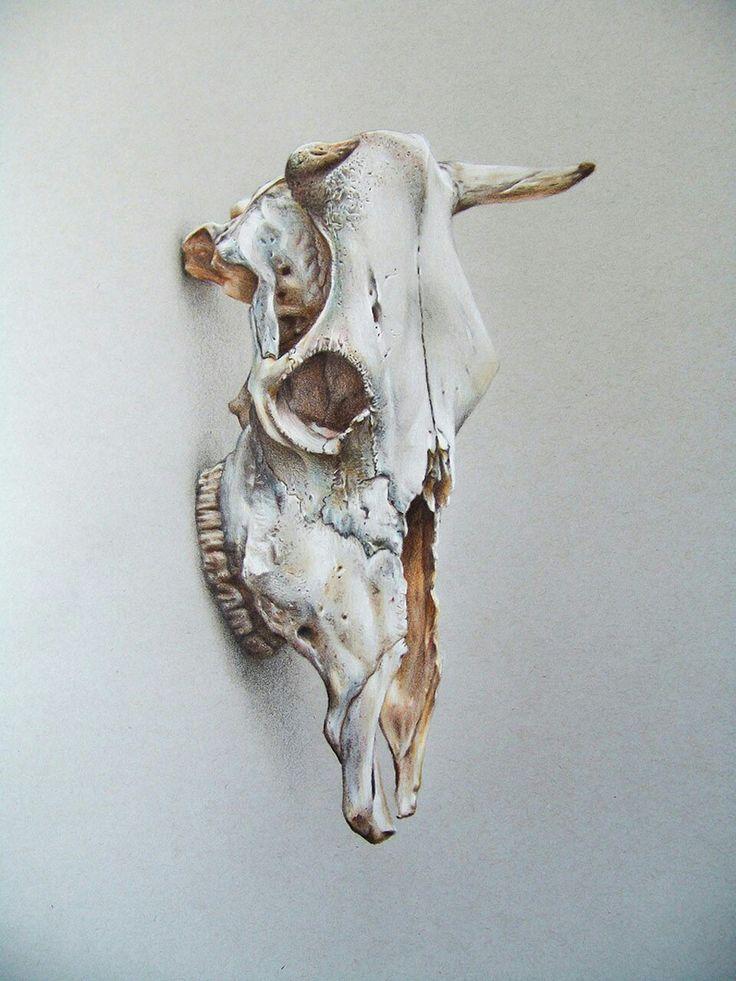 Cráneo de Vacuno - Lápices de Colores sobre papel gris, 40 x 60 cms.