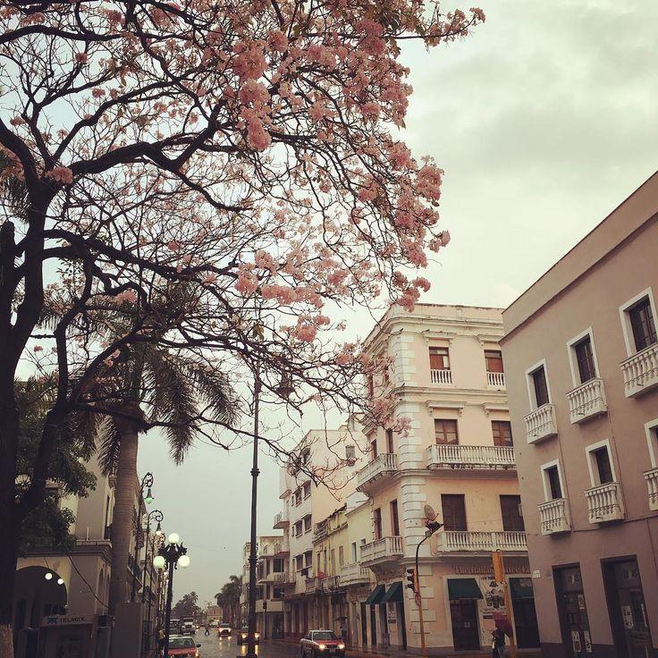 Rosa estilo jarocho tardío. #veracruzpuerto #malecon #centro