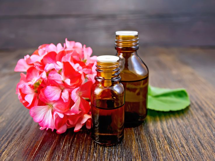 Geranium essential oil has a number of brilliant benefits and uses. It's great for skin, relieves stress and fatigue, improves mental function and more.