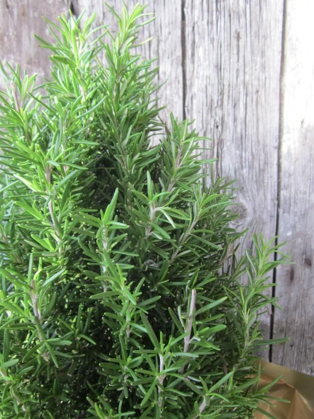 13 Easy Herbs To Grow Indoors Growing Herbs Indoors 400 x 300